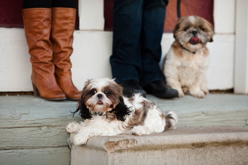 Dog Portraits Burlington NC