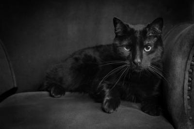 Cat Portraits Mebane NC