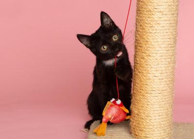 North-Carolina-Cat-Portrait