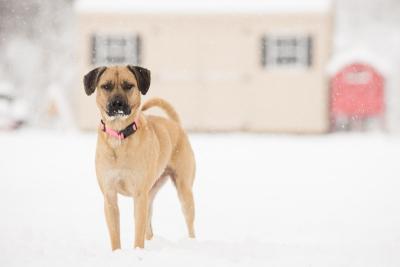 Snowy Pet Portrait